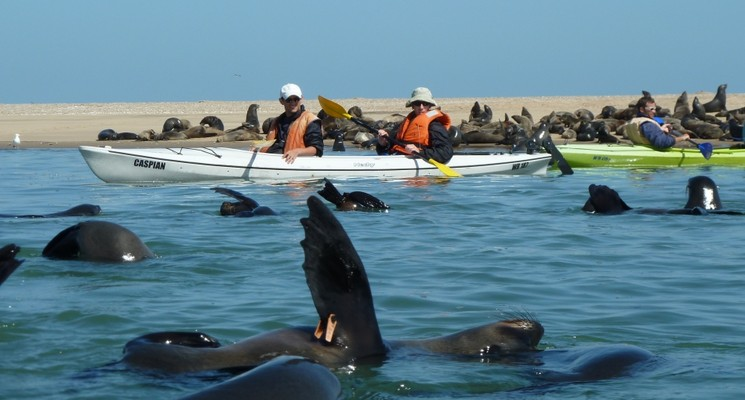 kayaking-with-seals-720×400