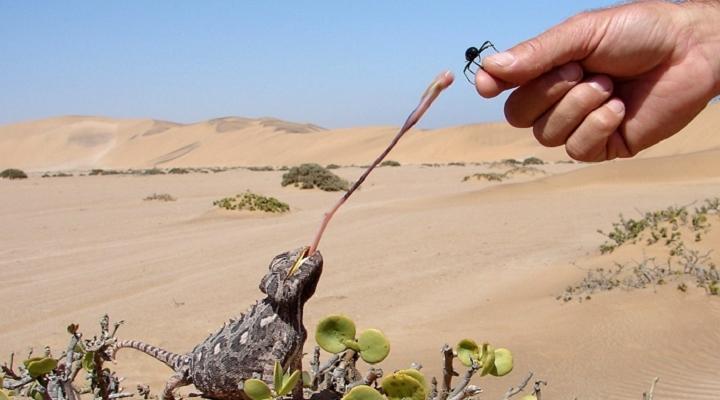 living-desert-tour-720×400