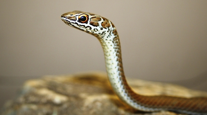 snake-park-720×479