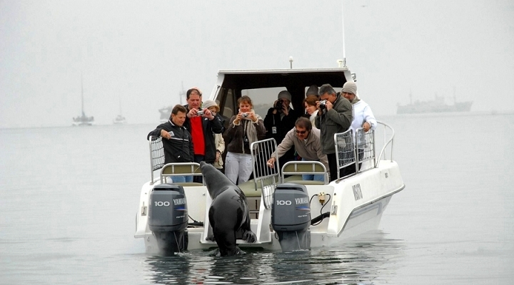 walvis_bay_seal_cruise-720×400